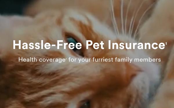 MetLife: 4 Reasons Pet Insurance Makes Sense for Employees
